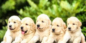 Obedience for Puppies