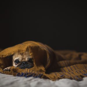 Healthcare Products for Dogs