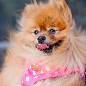 Bath and Beauty Products for Dogs